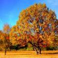 גוזם עצים מרכז מגוון רחב של שירותים תחת קורת גג אחת. בזכות היכולת של הגוזם לספק שירותים שמתאימים בחלקם גם לאנשים פרטיים או לבעלי בתים וגם לחברות, מוסדות וארגונים, יש […]